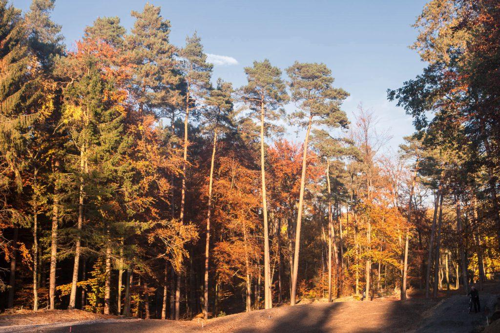 Im Herbst wird deutschland bunt - nicht braun!